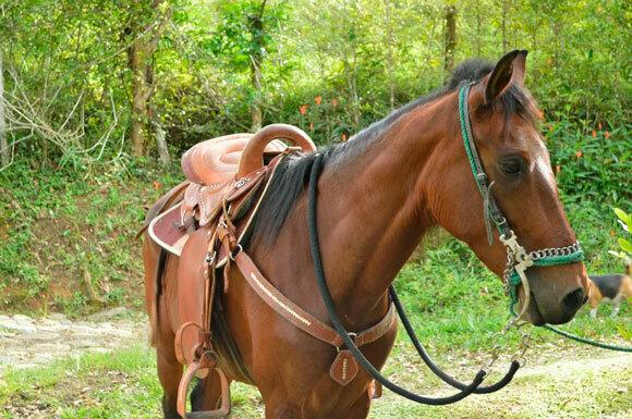 Лошадь годы лошади 30 января – 16 февраля ; 15 февраля – 4 февраля ; 3 февраля – 23 января ; 21 января – 8 февраля ; 7 февраля – 27 января ; 27 января – 14 февраля ; 12 февраля – 31 января ; 31 января – 18 февраля , 17 февраля – 5 февраля гороскоп.